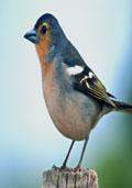 Vogelbosje (plantenpakket)